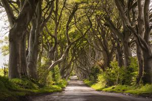 Dark Hedges - Noord Ierland