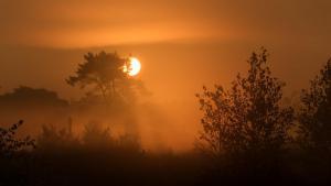 Zonsopgang Kalmthoutse Heide